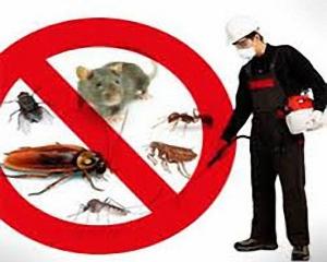 شركة-مكافحة-حشرات-بالخبر