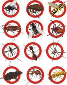 شركة مكافحة حشرات 0569210311
